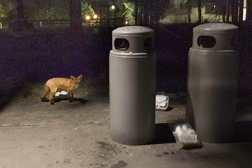 Wilde Tiere in der Stadt – Pindactica
