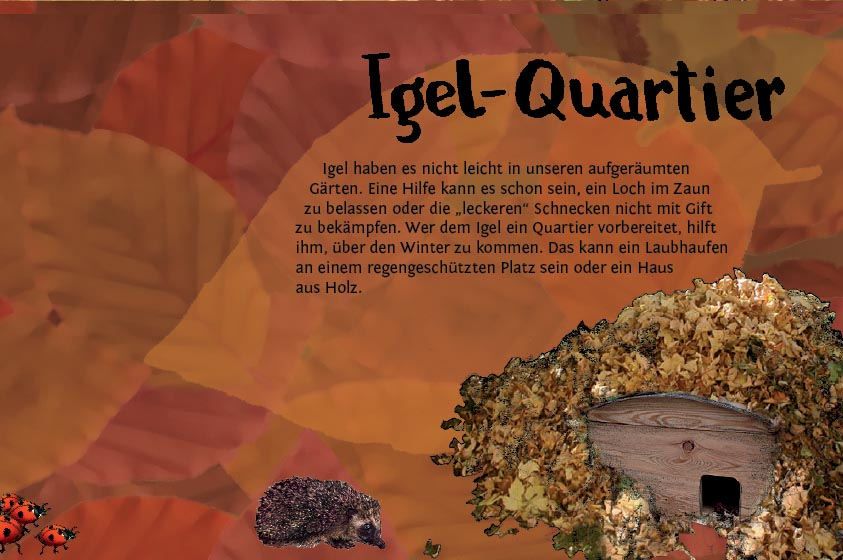Entdeckerkalender Oktober