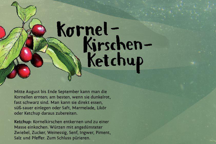 Geliebte Leckere Kornel-Kirschen – Pindactica @ZP_83
