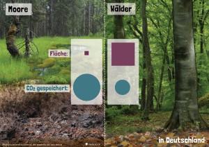 20 CO2-Senken – Moor und Wald im Vergleich